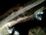Шельма загнала лису в сарай под пол заброшенного дома! часть 1
